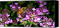 Insect Photography Canvas Prints - Follow The Bee Canvas Print by Terry Elniski