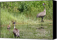 Bird Family Canvas Prints - Follow the Leader Canvas Print by Carol Groenen
