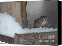 Bird On Feeder Canvas Prints - Food and Shelter in the Storm Canvas Print by Judy Via-Wolff