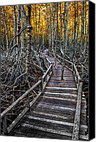 Wood Digital Art Canvas Prints - Footpath in mangrove forest Canvas Print by Adrian Evans