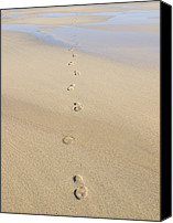 Lifestyle Prints Photo Canvas Prints - Footprints In Sand Canvas Print by Adrian Bicker