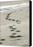 Artyzen Studios Canvas Prints - Footprints in the sand Canvas Print by AdSpice Studios
