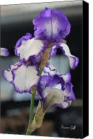 Floral Giclee Canvas Prints - For the Love of Irises Canvas Print by Suzanne Gaff