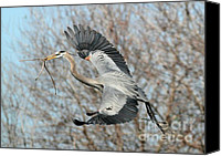 Herons Canvas Prints - For the Nest Too Canvas Print by Sabrina L Ryan
