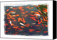 Good Luck Photo Canvas Prints - Forbidden City Koi Pond with Framing Canvas Print by Carol Groenen
