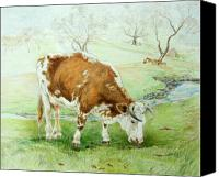 Cow Drawings Canvas Prints - Foremans Favorite Canvas Print by Jill Iversen