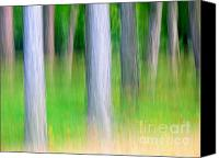 Screen Doors Canvas Prints - Forest abstract Canvas Print by Odon Czintos