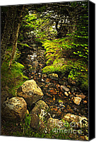 Tranquil Canvas Prints - Forest creek Canvas Print by Elena Elisseeva