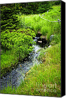 Grasses Canvas Prints - Forest creek in Newfoundland Canvas Print by Elena Elisseeva