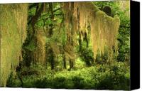 Damp Canvas Prints - Forest Fantasy - Quinault - Gateway to Paradise on the Olympic Peninsula WA Canvas Print by Christine Till