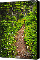 Roots Canvas Prints - Forest path in Newfoundland Canvas Print by Elena Elisseeva