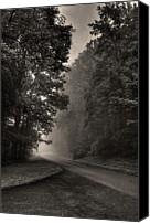 Parkway Canvas Prints - Forest Path Canvas Print by Maria Jaeger Photography