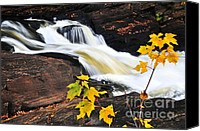 Outdoor Canvas Prints - Forest river in the fall Canvas Print by Elena Elisseeva