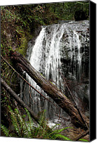 Mendocino Coast Canvas Prints - Forest Waterfall Canvas Print by Lorraine Devon Wilke