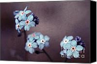 Textured Floral Canvas Prints - Forget Me Not 01 - s05dt01 Canvas Print by Variance Collections