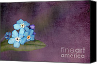 Textured Floral Canvas Prints - Forget Me Not 02 - s0304bt02b Canvas Print by Variance Collections