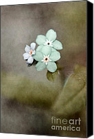 Textured Floral Canvas Prints - Forget Me Not 03 - s07bt07 Canvas Print by Variance Collections