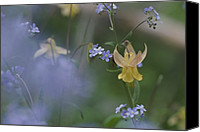 "\""forget Me Not Flowers\\\"" Canvas Prints - Forget-me-not And Yellow Columbine Canvas Print by Norbert Rosing"