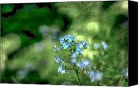 "\""forget Me Not Flowers\\\"" Canvas Prints - Forget-me-not Grunge Canvas Print by Darren Fisher"