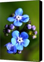"\""forget Me Not Flowers\\\"" Canvas Prints - Forget-me-not Canvas Print by Noah Cole"
