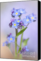 "\""forget Me Not Flowers\\\"" Canvas Prints - Forget-me-not spring Canvas Print by Jacky Parker"