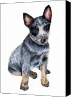 Blue Heeler Canvas Prints - Foster Canvas Print by Kristen Wesch