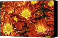 Daisies Flowers Canvas Prints - Foulee de Petales - Original Canvas Print by Variance Collections