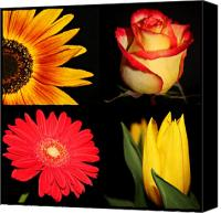 Sunflowers Canvas Prints - Four Beauties of Nature Canvas Print by Cathie Tyler