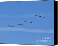Flyers Canvas Prints - Four Flyers Canvas Print by Al Powell Photography USA