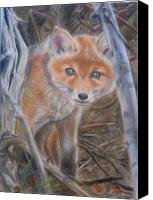 Fox Pastels Canvas Prints - Fox Cub Canvas Print by Irisha Golovnina