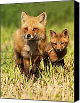 Mammals Canvas Prints - Fox Family Canvas Print by Mircea Costina Photography