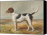 Foxhound Canvas Prints - Foxhound Canvas Print by Henry Guttmann