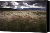 Foxtail Canvas Prints - Foxtail Barley Waves In The Wind Canvas Print by Phil Schermeister