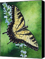 Swallowtail Canvas Prints - Fragile Beauty Canvas Print by Barbara Keith