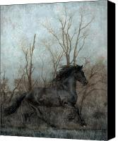Stallion Canvas Prints - Free Canvas Print by Jean Hildebrant