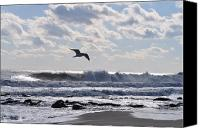 Jersey Shore Canvas Prints - Free Spirit Canvas Print by Joe  Burns