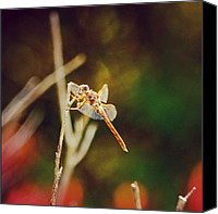 Dragonfly Canvas Prints - Freedom - Beautiful Freedom Canvas Print by Joel Lopez