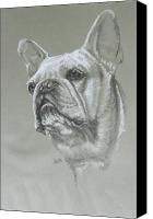 Pets Canvas Prints - French Bulldog Canvas Print by Barbara Keith