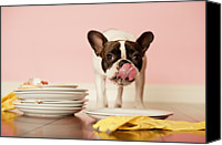 French Bulldog Canvas Prints - French Bulldog Licking Dirty Dishes Canvas Print by Valderrama Photography