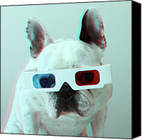 Animal Head Shot Canvas Prints - French Bulldog With 3d Glasses Canvas Print by Retales Botijero