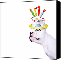 Food And Drink Canvas Prints - French Bulldog With Birthday Cake Canvas Print by Maika 777