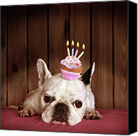 No People Canvas Prints - French Bulldog With Birthday Cupcake Canvas Print by Retales Botijero