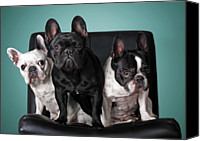 French Bulldog Canvas Prints - French Bulldogs Canvas Print by Retales Botijero