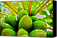 Aid Canvas Prints - Fresh Papayas Canvas Print by Cheryl Young