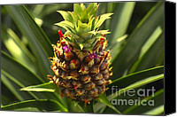 Tropical Plants Canvas Prints - Fresh Pineapple Canvas Print by Cheryl Young