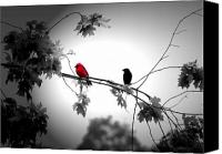 Red Cardinal Canvas Prints - Friends Canvas Print by Emily Stauring