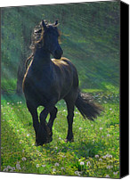 Horse Photographs Canvas Prints - Friesian Sun Canvas Print by Fran J Scott