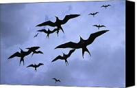 Frigates Canvas Prints - Frigate Birds In Flight. Lighthouse Canvas Print by Ron Watts