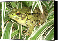 Rachel Snell Canvas Prints - Frog In Plant Canvas Print by Rachel Snell