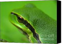 Screen Doors Canvas Prints - Frog look Canvas Print by Odon Czintos
